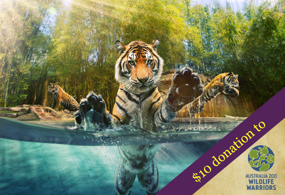 Australia Zoo Wildlife Warriors Tiger Case From Sprout