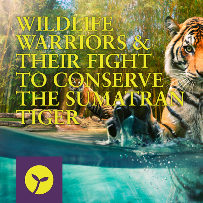 Enter The Warrior S Gate 2 Subtitle Indonesia: Wildlife Warriors And Their Fight To Conserve The Sumatran